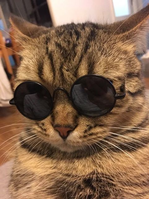 Cute Dogs And Cats With Sunglasses